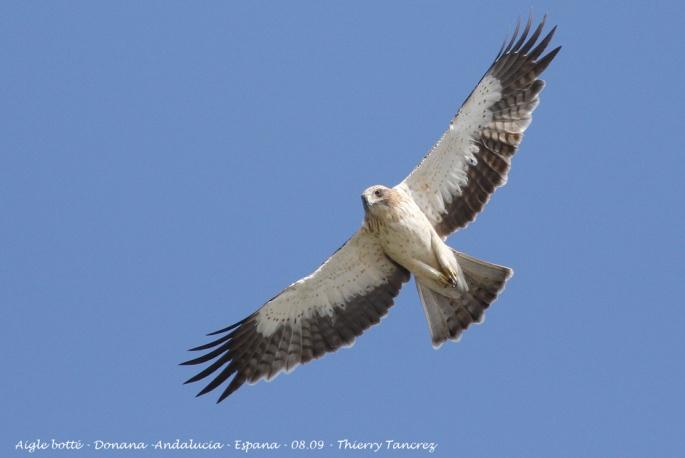 Un regard d'aigle